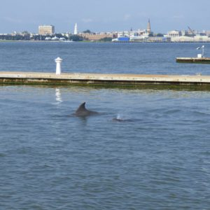 Dolphins part of perfect day in Charleston,SC