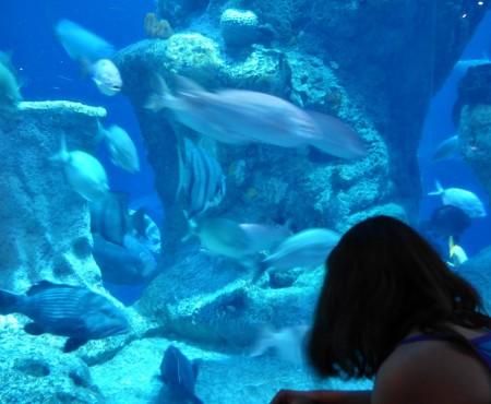 SC Aquarium has 2 story shark tank